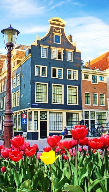 Houses and tulips in Amsterdam