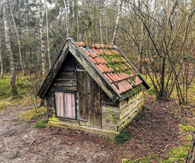Tiny cabin in the woods of  Drenth