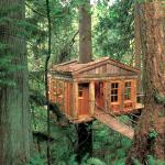 Redwood boomhut in Healdsburg, Californi?