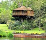 Amazon Tree House